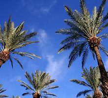 Palm Trees Blue Sky by Jo Nijenhuis