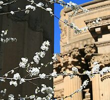 San Francisco: Palace of Fine Arts 4 by Kezzarama