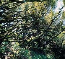 dipsea sticks by simeon schatz