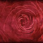 A Rose Is A Rose Is A Rose by Alexandra Lavizzari