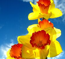 Daffodills in the Sky by scenebyawoman