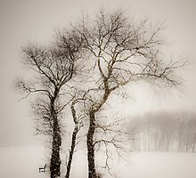 Whiteout at Colt Park by Jan    Armor