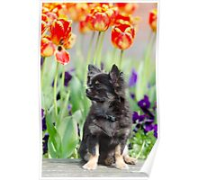 Dog and flowers Poster