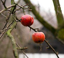 Apples in the back garden.. by Kasia Fiszer