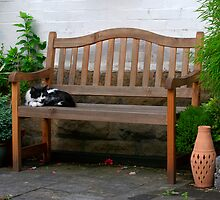 Cat napping by EileenLangsley