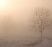 Tree in Meadow II by Michael  Dreese