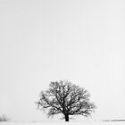 Winter Tree by Richard Sloman