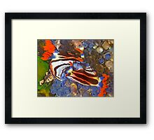 Nembrotha Nudibranch Mating Framed Print