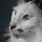 Cats Life by Joy Watson