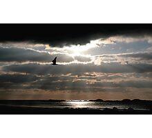 """""""Lone Gull"""" Photographic Print"""