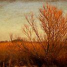 Orange winter by Anne Staub