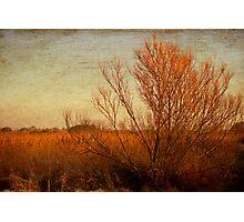 Orange winter Photographic Print