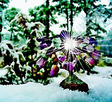 The Gem  Tree /  In Snow   by Rick  Todaro