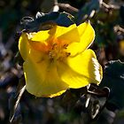 Bright yellow blooming flower by photoclimber