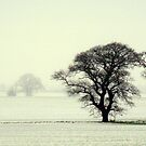 Snowy Field ~ by Kate Towers IPA