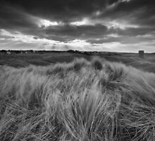 Wind Swept by PhotoToasty