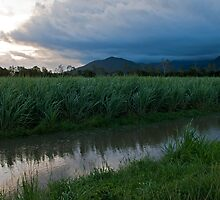 Sunset on the Cane by James  Messervy
