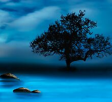Blue Night by Katy Breen