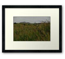 Long grass. Framed Print