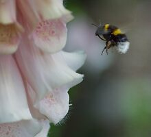 Bee at work by horus40