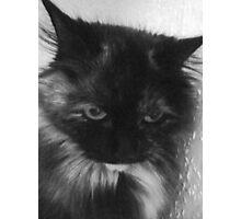 Charcoal Cat Photographic Print