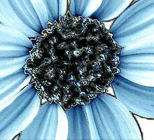 Blue by Donna Adamski