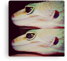 Eye of The Gecko  Canvas Print