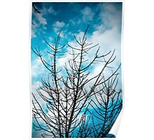 Bright Sky, Blue Trees Poster