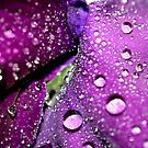 Purple Rain by Sharon Johnstone