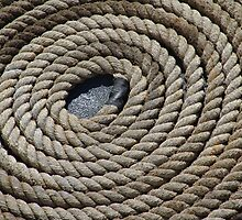 Rope Coil by contagion