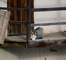 Cat on an old balcony by becks78