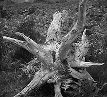 Tree Skeleton by Les Meehan