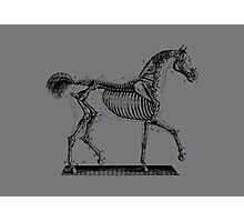 Horse Anatomy Vintage Photographic Print