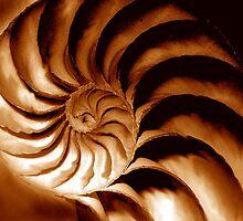 nautilus spiral by lastgasp