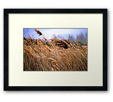 Blowing prairie Grass Framed Print