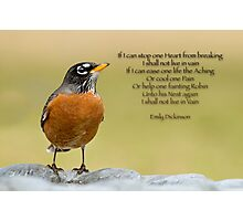 Emily Dickinson's Robin Photographic Print