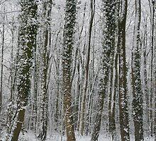 Snow storm by Jeff  Wilson