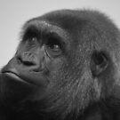 Female West Lowland Gorilla by Franco De Luca Calce