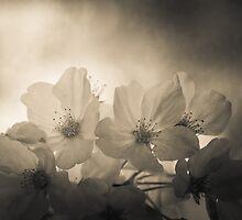 Relic blossom by Sue Morgan