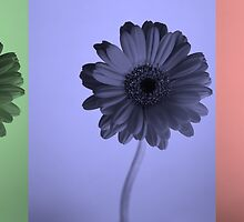 three colour flowers by matt reeves