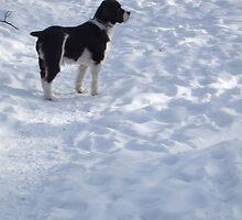 dog in snow by sianteri