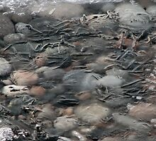 Frozen textures and rocks in Lake Superior - Marathon, Ont by loralea