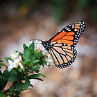 Butterfly 02 by Matt Fricker Photography