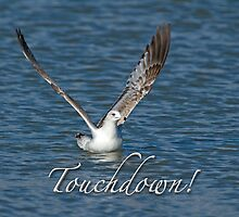Touchdown! by Bonnie T.  Barry