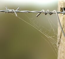 Twisted web by Michael Fotheringham Portraits