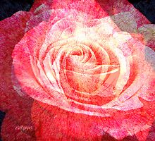 Scent of a Rose by Seth  Weaver
