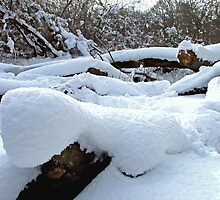 Snow Logs by Colin J Williams Photography