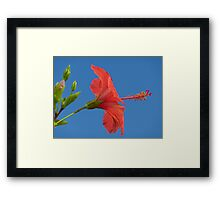 Blue Sky And Hibiscus Framed Print