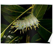 The Hercules Caterpillar  I Poster