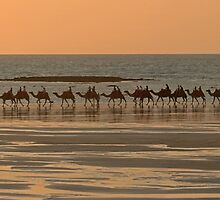 Cable beach camel  by Elliot62